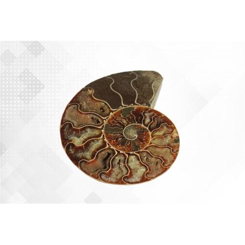 минерал Аммонит 12 см