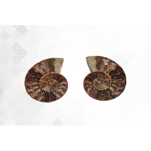 минерал Аммонит пара 5.5 см №1