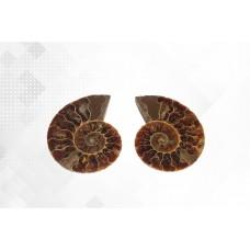 минерал Аммонит пара 5.5 см №3