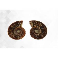 минерал Аммонит пара 5.5 см №4