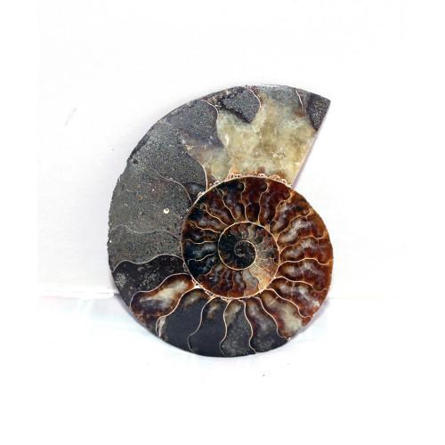 минерал Аммонит 10 см